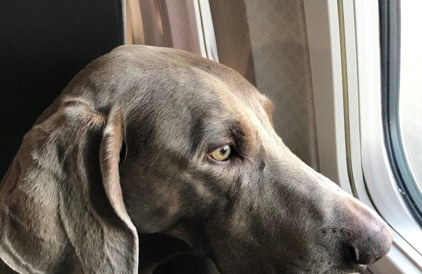 Viaggiando con Duke