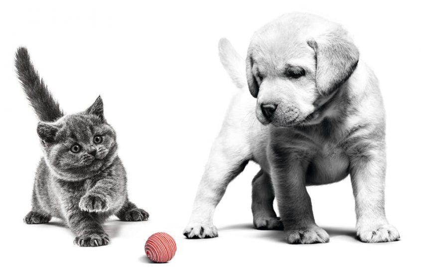 la #CiotolaSospesa di Royal Canin: 100mila pasti a cani e gatti senza famiglia