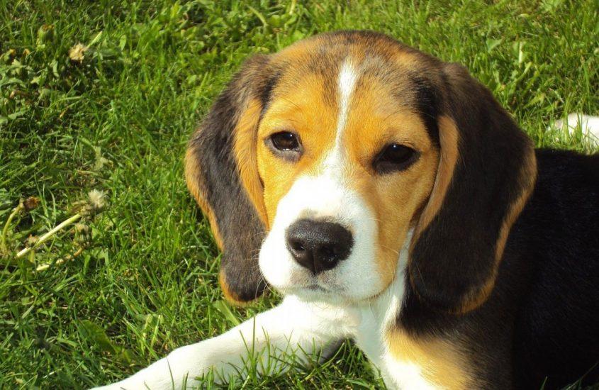 #sonoqualcunononqualcosa: servono leggi per tutelare gli animali