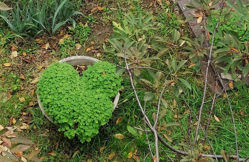 L'erba del Sior Pare è sempre più verde