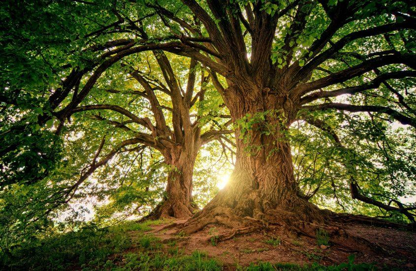 Più alberi per contrastare la crisi climatica