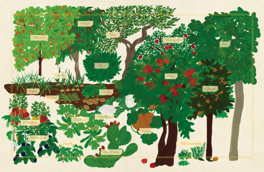 Piccolo Erbario, storie e segreti di alberi e piante
