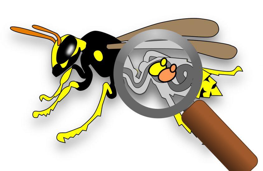 Perché le vespe sono afrodisiache per i lieviti