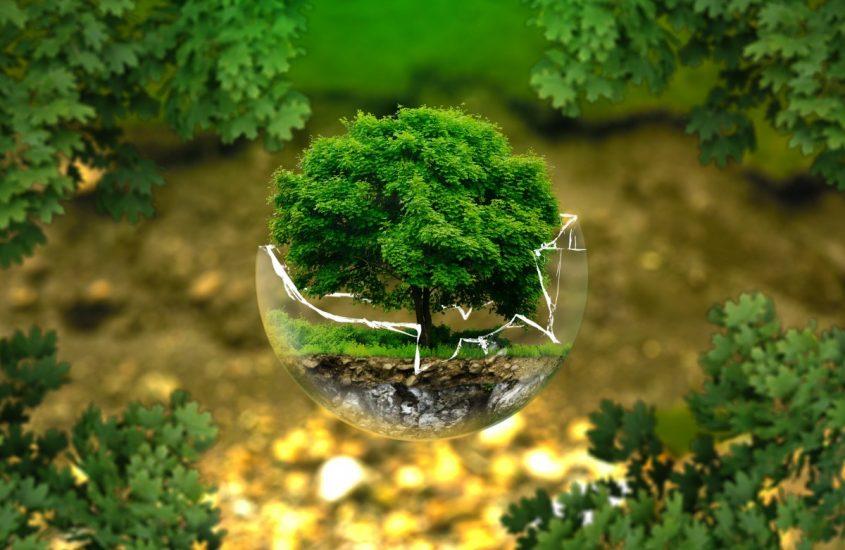 Siamo tutti come alberi