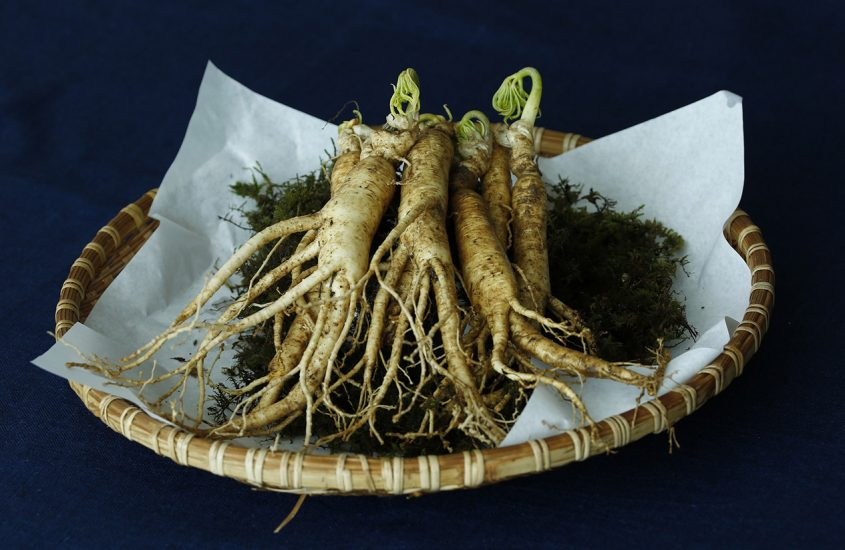 Nutraceutica: Panax Ginseng