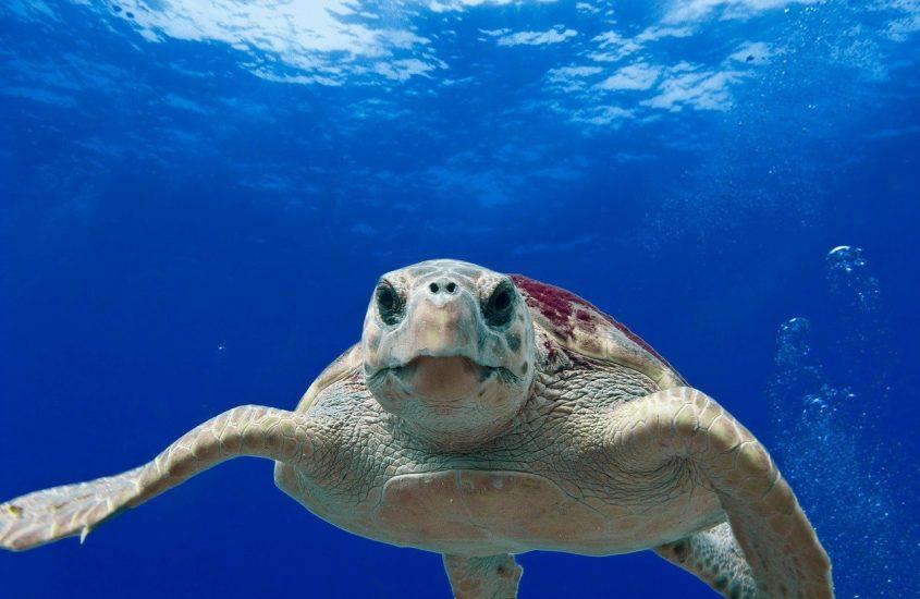 Le otto specie in via d'estinzione