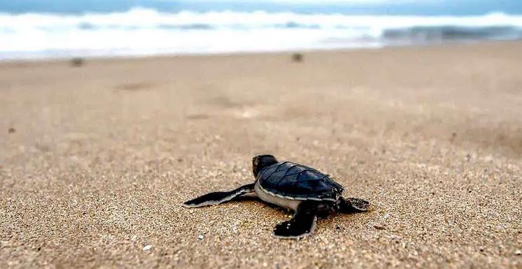 "Tartalove, una mamma ""umana"" per le tartarughe del Mar Mediterraneo"