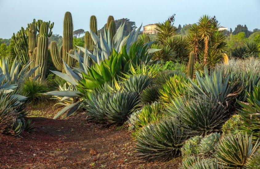 Radicepura: in Sicilia la Biennale del paesaggio mediterraneo