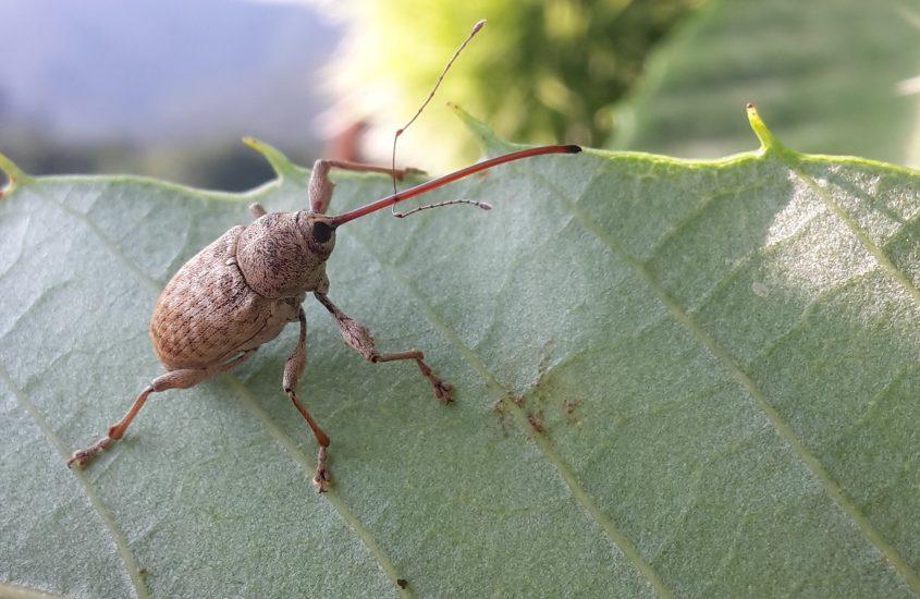 UniTo, l'importanza degli insetti nella lotta biologica integrata