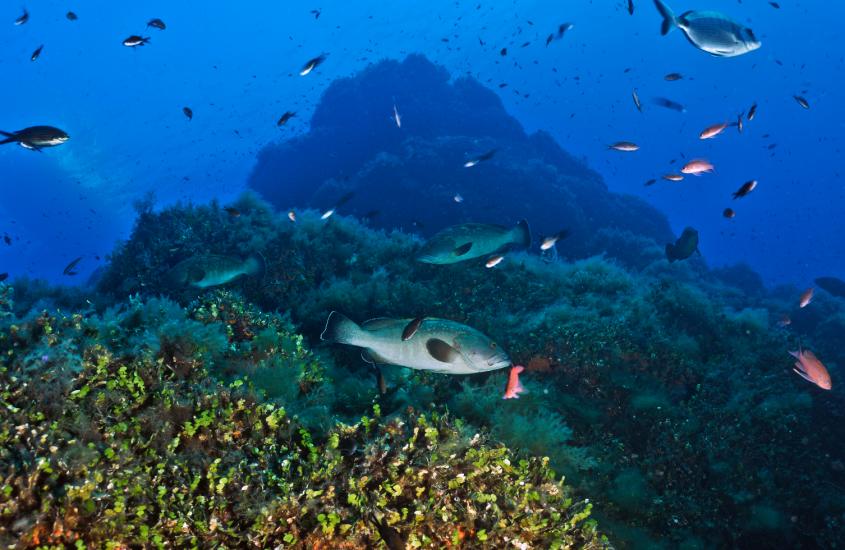Oceani, una guida globale permetterà di proteggerli