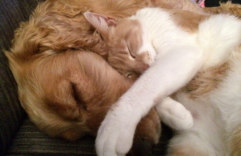 Come cane e gatto: i miti da sfatare