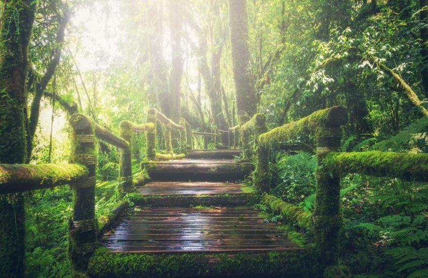 Il sentiero di Abeona