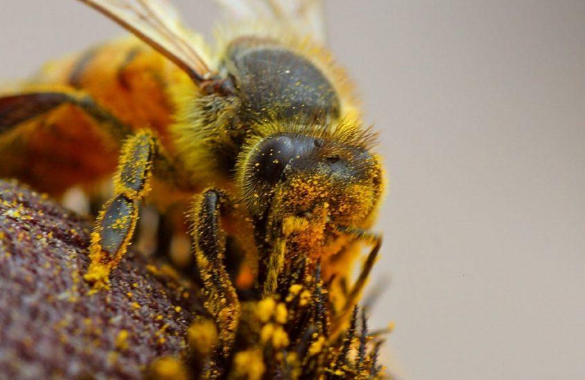 Pollinaction, il progetto che salva gli impollinatori